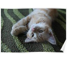 Ginger the Cat Poster