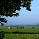 Cows in the Mist by Charmiene Maxwell-Batten