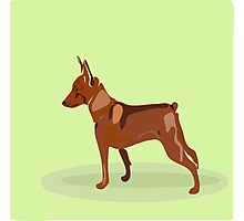 Hand drawn illustration of miniature pinscher. Photographic Print