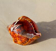 Seashell on the Seashore by AndrewWilson94