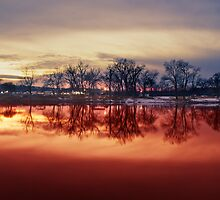 Reflect by C-Willis