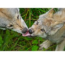 Tongue Lashing Photographic Print