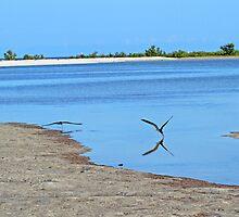 Scenic Marco island by jozi1