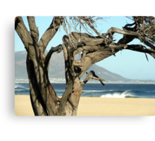 A holiday behind the tree Canvas Print