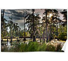 Sam Houston Swamp Poster