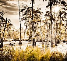 Sam Houston Swamp-4 by RKimages