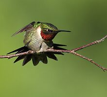 Hummer by Bill McMullen