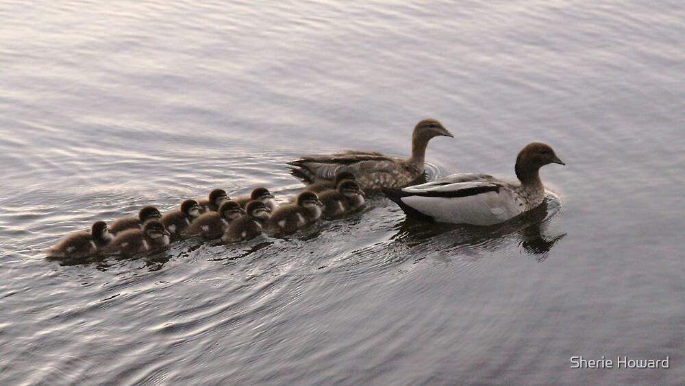 Duck Season by Sherie Howard