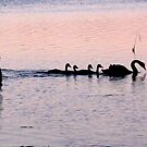 Swan Lake by Sherie Howard