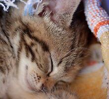 Sleepy Cleo by David Jenkins