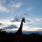 Giraffe's sunset, Etosha, Namibia by opticallusion