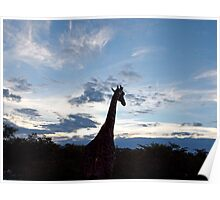 Giraffe's sunset, Etosha, Namibia Poster