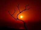 Evening Branch by Vicki Spindler (VHS Photography)