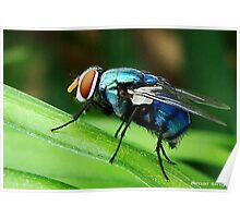 blue bee Poster
