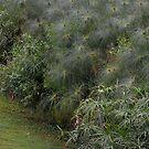 Grasses by Margaret  Shark