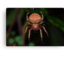 Red Orb Weaver Canvas Print