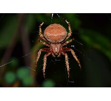 Red Orb Weaver Photographic Print