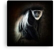 Colobus monkey ~ Canvas Print