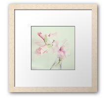 Sweet Gladiola Framed Print