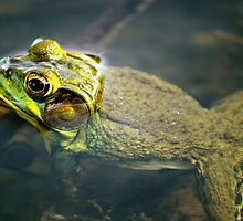 Frog in Water by Chris Richards
