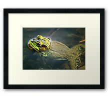 Frog in Water Framed Print
