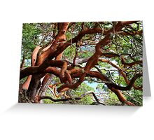 Arbutus in a tangle  Greeting Card