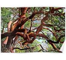 Arbutus in a tangle  Poster