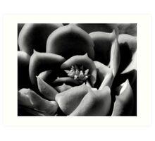 Succulent Shades Art Print