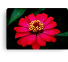 Pink in Detail Canvas Print