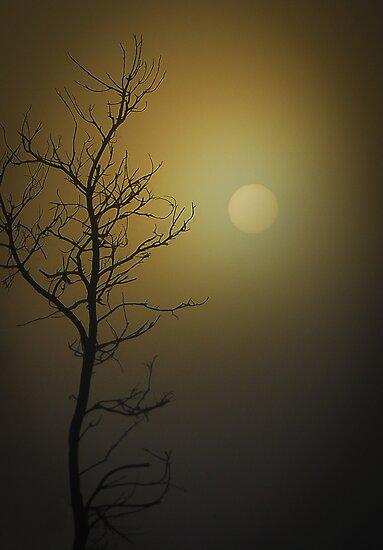 Morning skys by Callum Brown