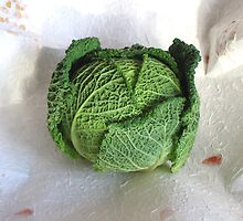 Savoy Cabbage by BizziLizzy