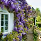 Wisteria Welcome  by Susie Peek