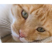 cat called Flame Photographic Print
