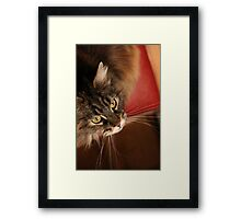 If only the human would just keep that string still ... Framed Print