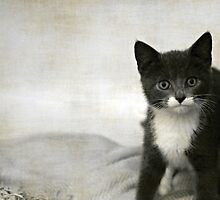 Kitten by Anne Staub