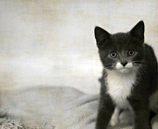 Kitten by Anne Staub