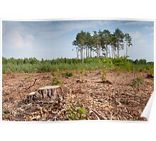 Woods logging one stump Poster