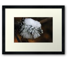 fluffy wild flower macro Framed Print