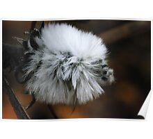 fluffy wild flower macro Poster