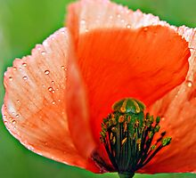 That we find a crystal or a poppy beautiful... by Gregoria  Gregoriou Crowe