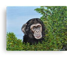 Little Chimp Canvas Print