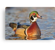 Happy to be a wood duck Canvas Print