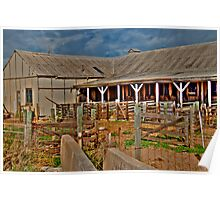 Shearing Shed Quobba Station Poster