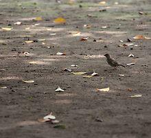 Little bird seaking food by Sam331
