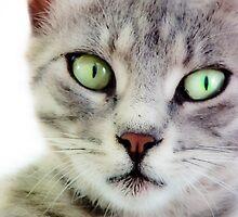 Street Cat in Istanbul II by kutayk