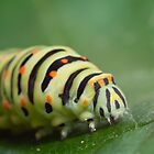 green caterpillar by Bartosz Chajek