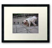 pee pee dog, so happy Framed Print