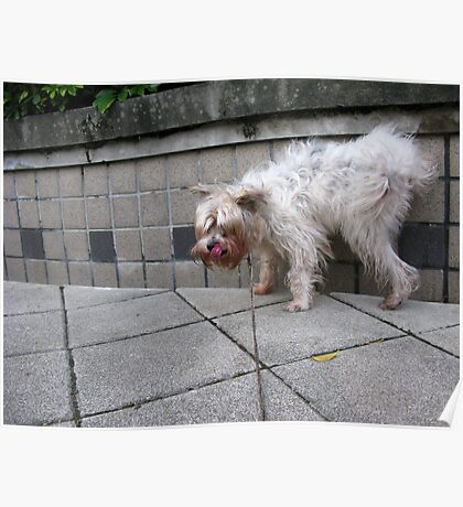pee pee dog, so happy Poster
