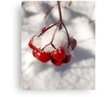American Cranberries in Snow Metal Print