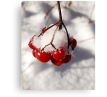 American Cranberries in Snow Canvas Print